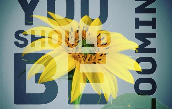 Social Media – Blooming
